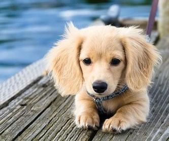 Análisis clínicos: Servicios de Gos i Gat clínica veterinària sl