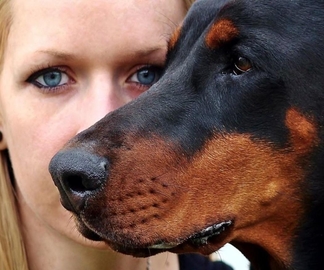 Causas del estrés en los animales de compañía
