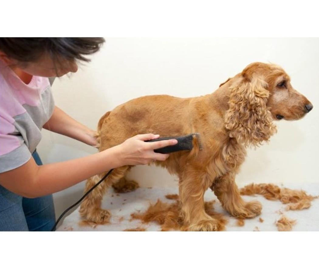Cuándo cortar el pelo a un perro