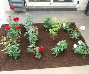 Rosales para el jardín