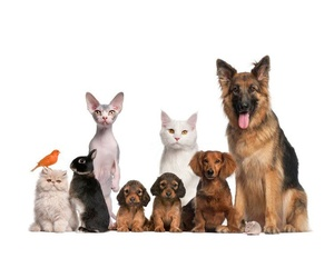 Todos los productos y servicios de Veterinarios: Clínica Veterinaria Layos