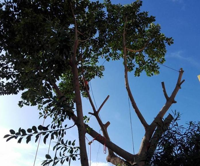 Ejemplo de tala de árbol