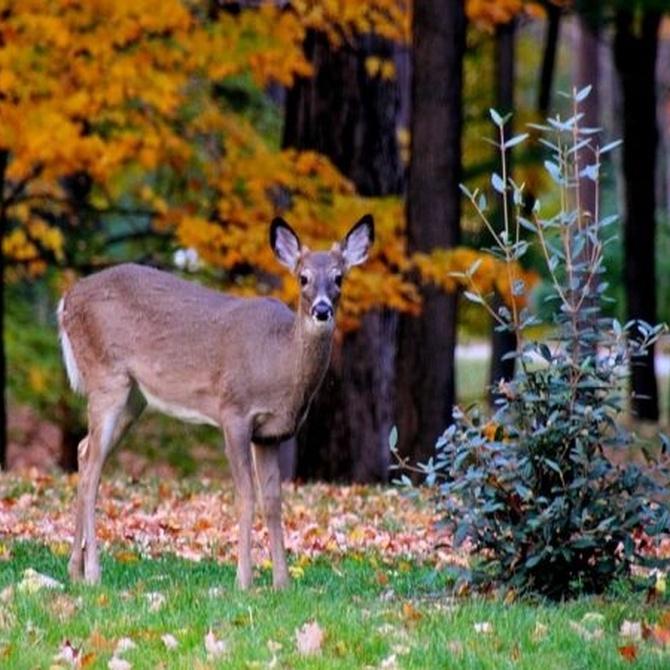 Documentación requerida para la tramitación del permiso de caza