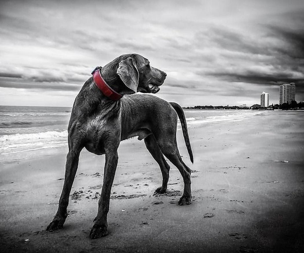 El pienso para perros y las alergias