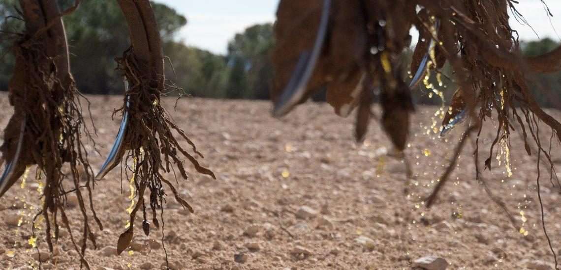 Instalación de riegos en Albacete para cada tipo de cultivo