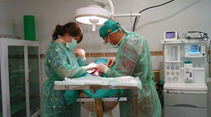 Cirugía: Catálogo de Clínica Veterinaria Campo de Níjar