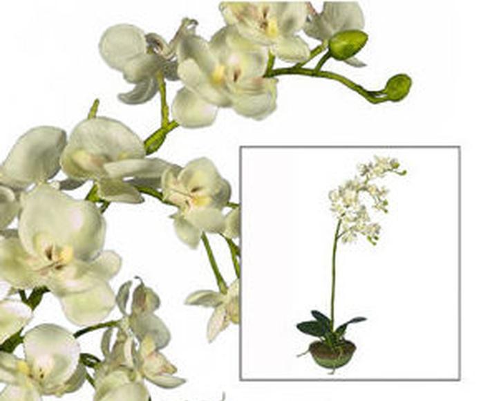 Maceta Orquídea Cerámica