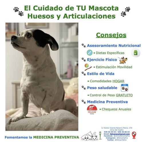 El Cuidado de TU Mascota -  Huesos y Articulaciones  - CONSEJOS
