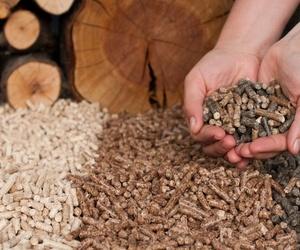 Los pellets y el medio ambiente