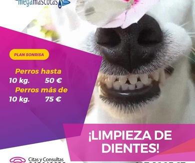 ¿Sabes cómo cuidar los dientes de tu mascota ?
