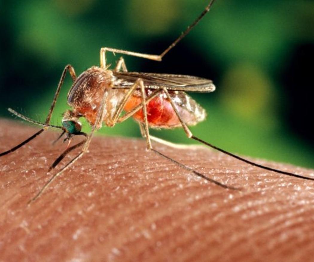 Cómo identificar el insecto que te ha picado