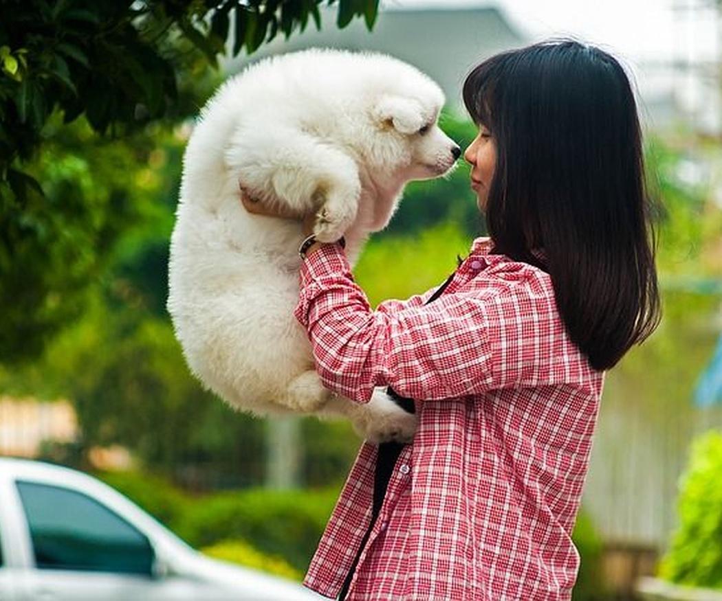 ¿Qué beneficios te aporta tu mascota para tu salud?
