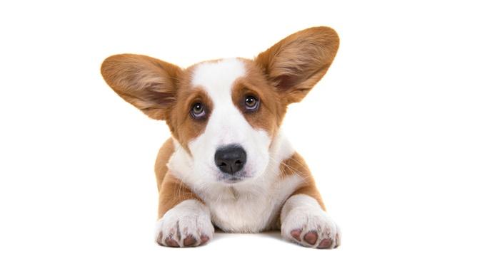 mirada-perros.png