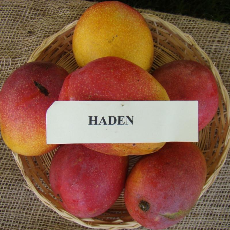Mango Haden: Productos de Mundifruit