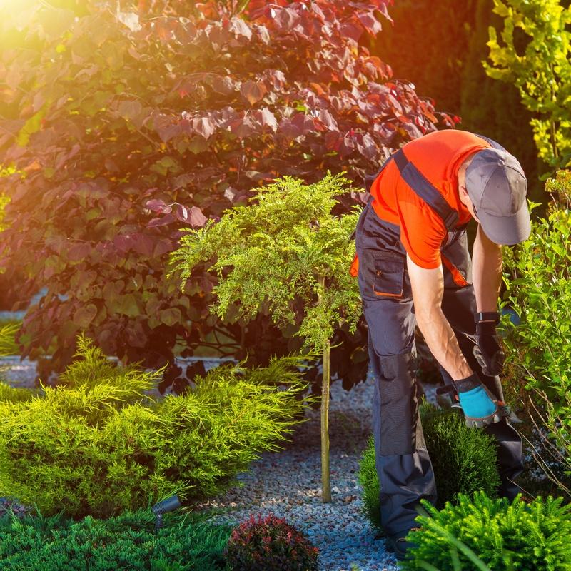Cirugía de arbolado y tratamientos fitosanitarios: Nuestros servicios de Jardinería Bordera