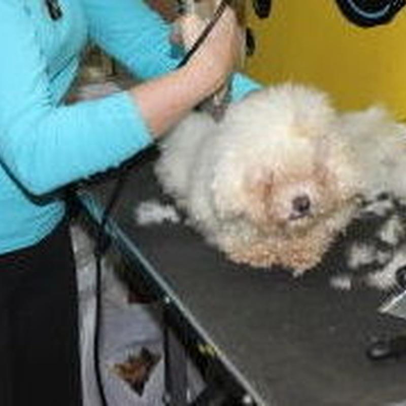 Corte con máquina: Servicios de Pets-&-Us