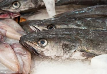 Comercio mayorista de pescado fresco