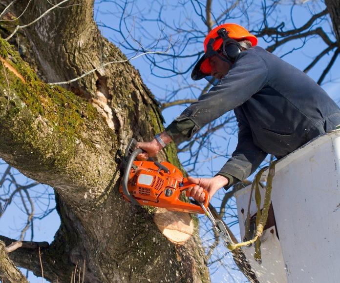 Servicios de jardinería y mantenimiento: Servicios de Nacelim servicios y mantenimientos