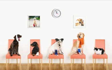 Servicios veterinarios especializados