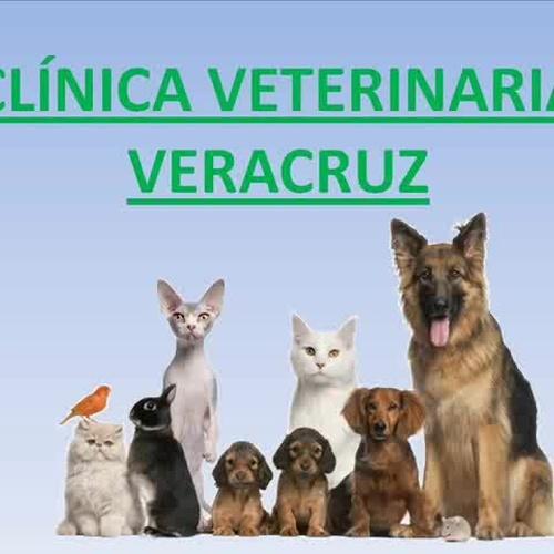 Tratamientos Centro Veterinario Veracruz
