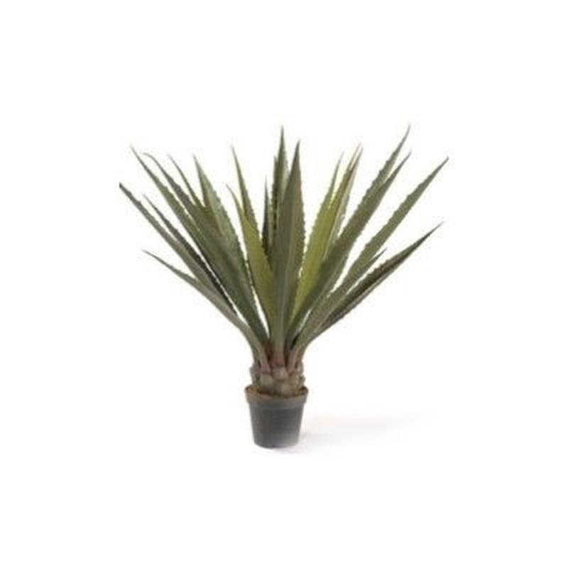 Planta Agave Corona ancha: ¿Qué hacemos? de Ches Pa, S.L.