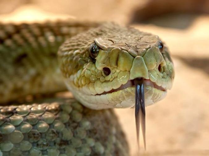 Licencias para animales potencialmente peligrosos
