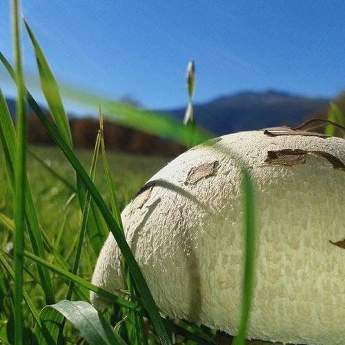 Asadores en Rascafría | La Fanega de Roque  | Restaurantes en Rascafría