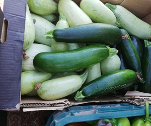 Venta de fruta y verdura ecológica en Velilla de San Antonio, Madrid