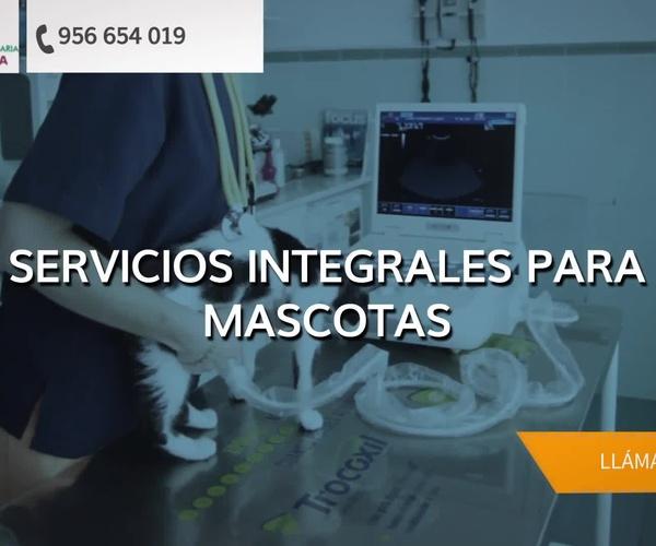 Veterinarios   en Algeciras | Clinica Veterinaria La Huella