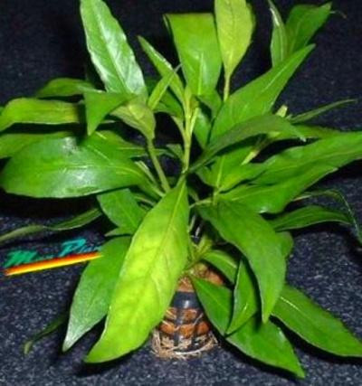 Plantas: Planeta Azul