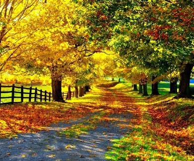 Llega el otoño, la peor estación de los depresivos