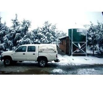 Reproducción equina: Servicios de Clínica Veterinaria San Antonio