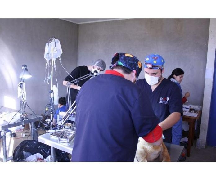 Cirugía : Servicios de Centro Veterinario Ciempozuelos