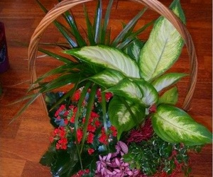 Plantas y detalles