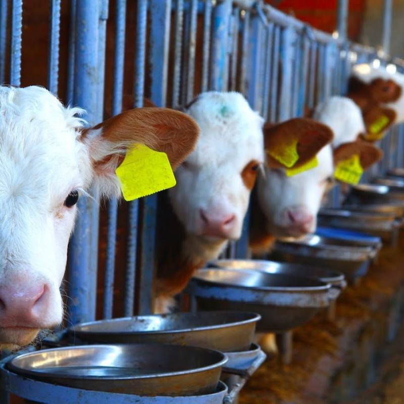 Formación de Responsables de Bienestar Animal: Servicios de Asial