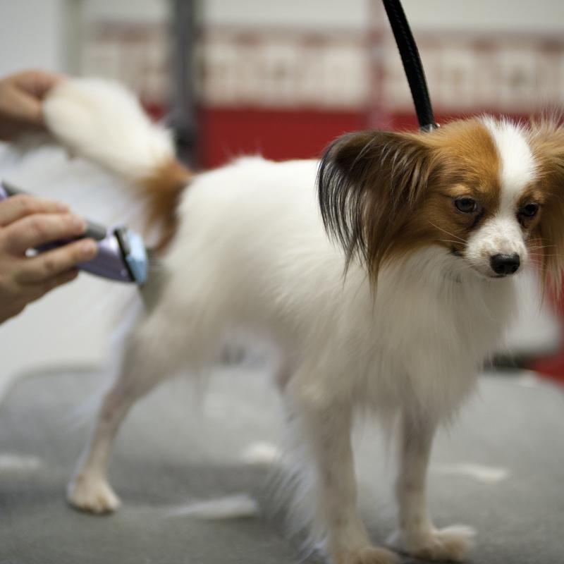 Peluquería canina: Servicios de Clínica Veterinaria La Adrada