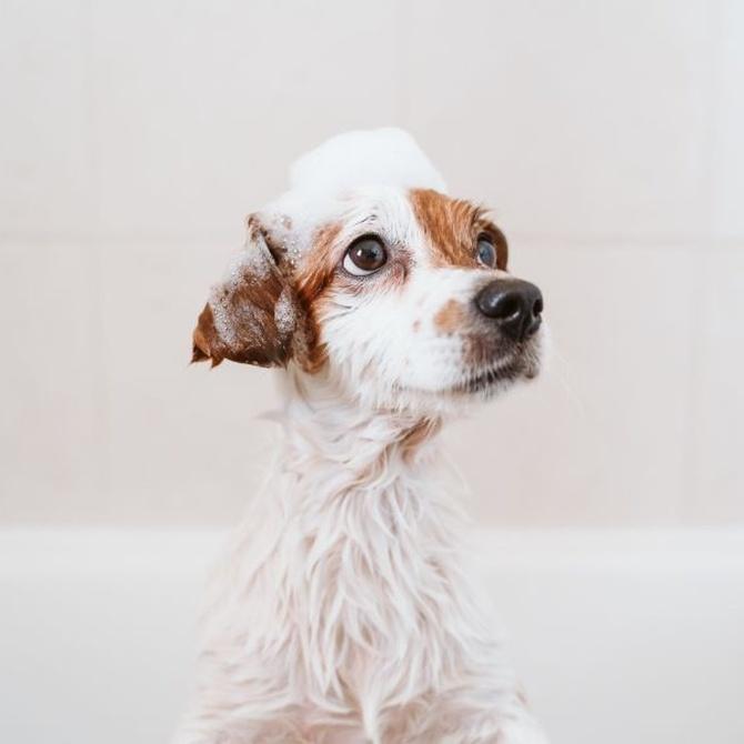 Cómo cuidar de la higiene de tu perro