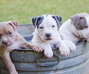 Especialistas en cachorros