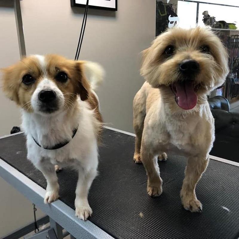 Peluquería canina: Servicios Veterinarios de Kan's&co Clínica Veterinària