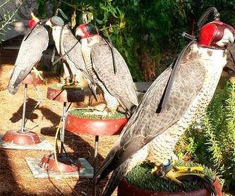 Control de natalidad de palomas: Servicios de Juan Falcon