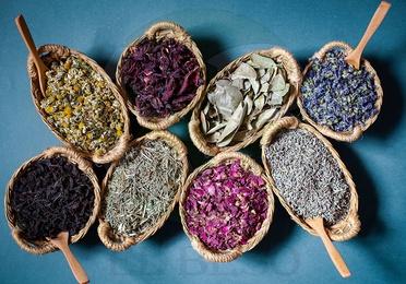 Plantas medicinales P