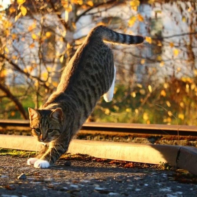 El peligro de las caídas de los gatos