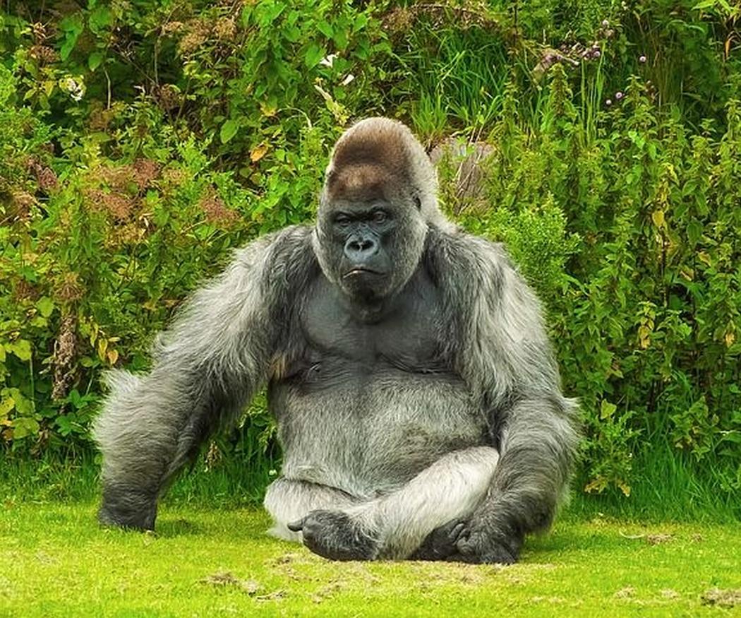 Donkey Kong y su recordman caído
