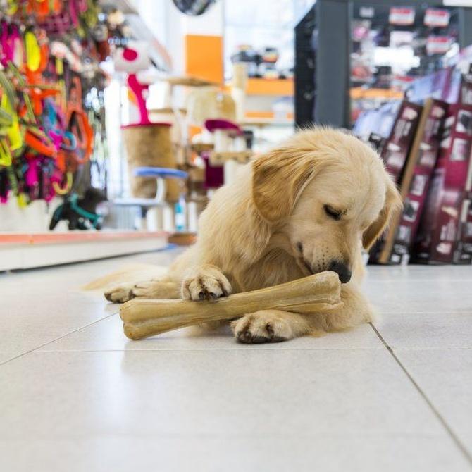 Los 3 accesorios para perro que nunca deben faltar