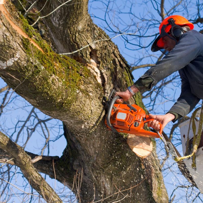 Poda de árboles y palmeras: Productos y servicios de Marga Garden