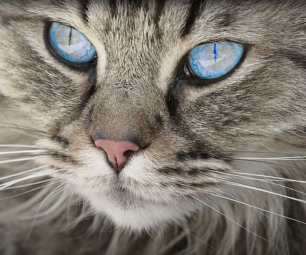 Cómo elegir un pienso para gatos