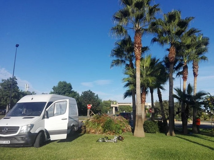 Poda de palmeras en Ibiza