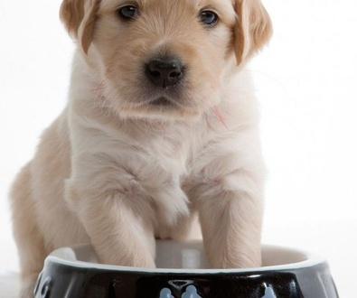 La importancia de la alimentación del cachorro