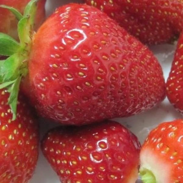 Fresas y frutos rojos