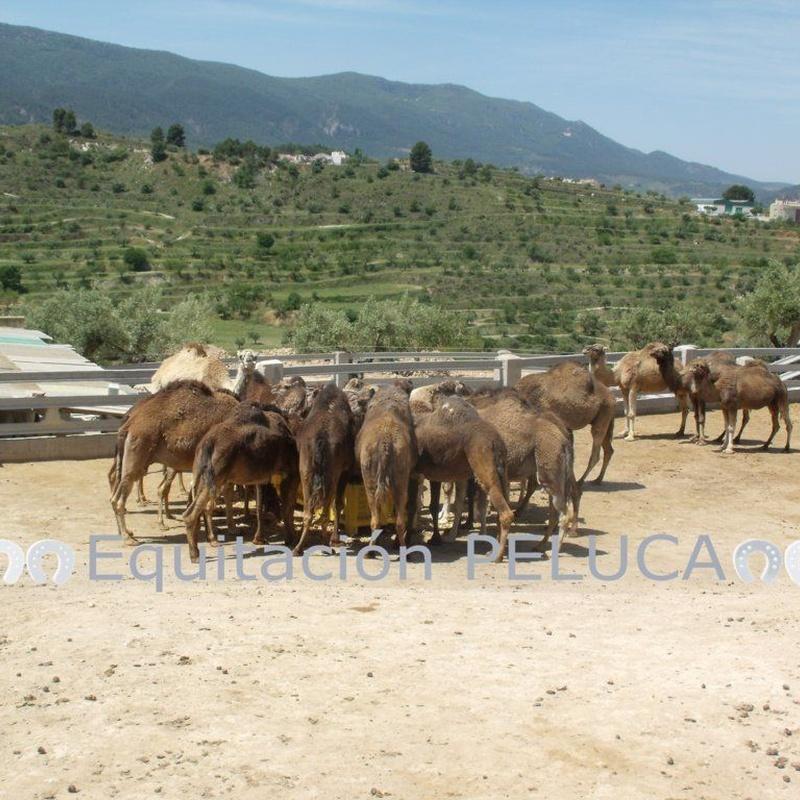 Pupilaje: Servicios de Equitación Peluca